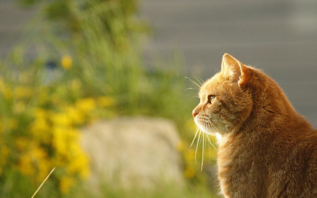 Hommage aux chats qui ne sont plus