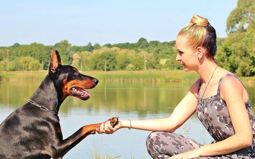 """L'histoire de Julie et son chien """"Julius"""" ou qu'est-ce que le deuil animalier?"""