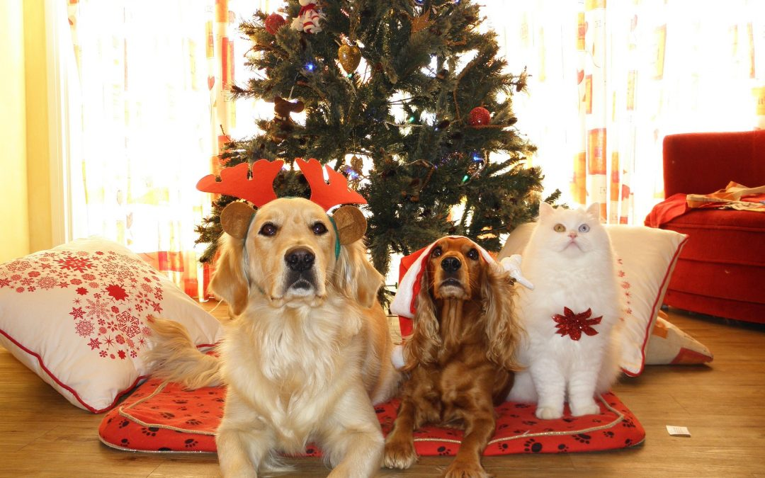 Comment vivre le deuil de mon animal pendant les fêtes?